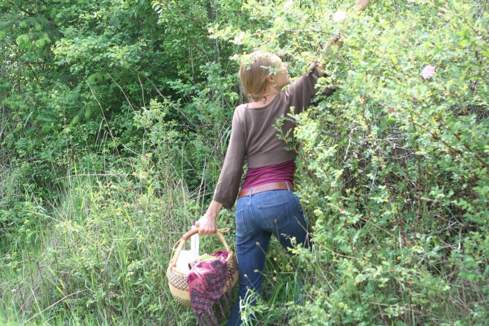 Harvesting Roses